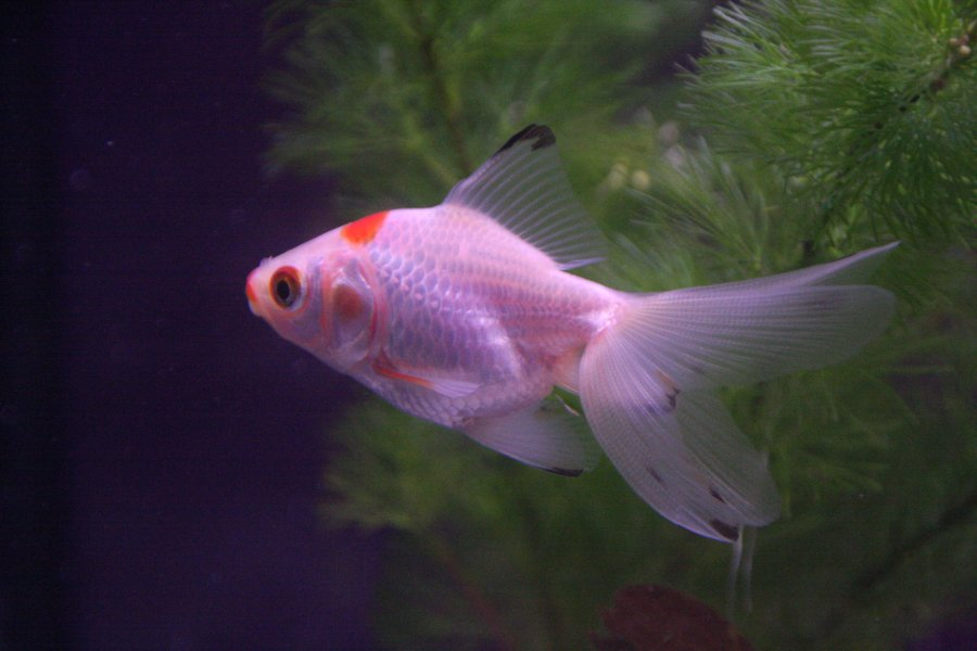 Different types of cold water fish different types of for Cold freshwater fish